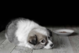How to manage your dog's Colitis
