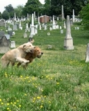 A Grave Situation: Dog-Friendly Cemeteries