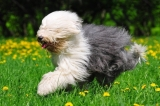 5 Useful things you can do with dog hair