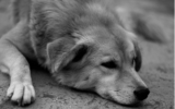 How to treat your dog's Addison's Disease