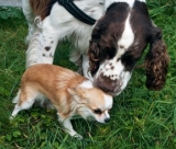 New study shows that bigger dogs are more prone to diseases