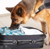Peanut-Sniffing Dogs Save Lives