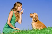 Obedience training tips for dogs
