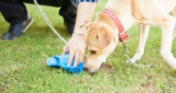 How to train your dog to stop eating poop
