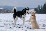How To Socialize A Dog [Get Your Pup Ready For The World]