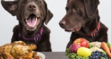 April Fool Your Dog Into Eating a Healthier Diet