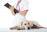 7 Questions Your Veterinarian May Ask You: Be Prepared